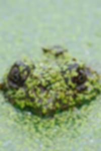 صور الألبان خمر كوبل