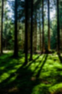 أفضل مواقع المواعدة المجانية في تايلاند