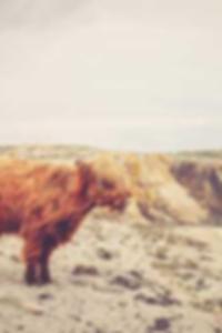 اللعنة المقدسة انها ثقب المجد