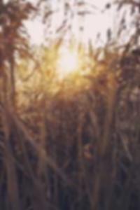 خايمي لي بريسلي صور عارية