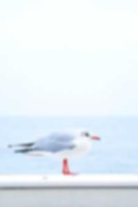 مسابقة بيكيني الصور ملهى ليلي