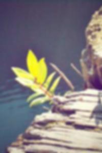 أوليفيا وايلد صور المشاهير عارية